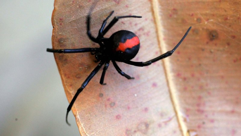 Put down the pesticides: Why you shouldn't be spraying your spiders this summer