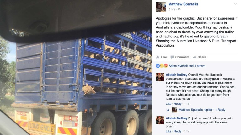 It did not look alive': shock at sheep's head trapped in truck