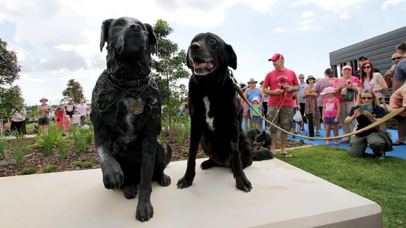 Canine war hero Sarbi visits Brisbane dog park named in her honour
