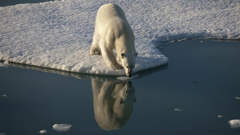 Emotional video of starving polar bear shows climate change impact