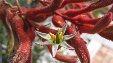 A lick of frost australia