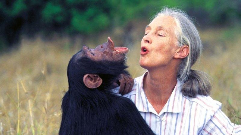 The world's favourite chimpanzee whisperer Jane Goodall talks
