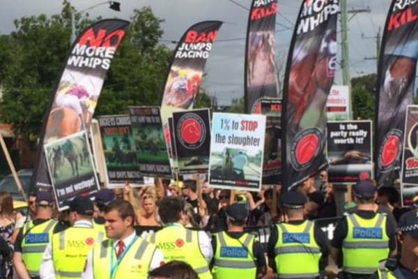 Animal rights activists push for industry changes after shock Melbourne Cup death