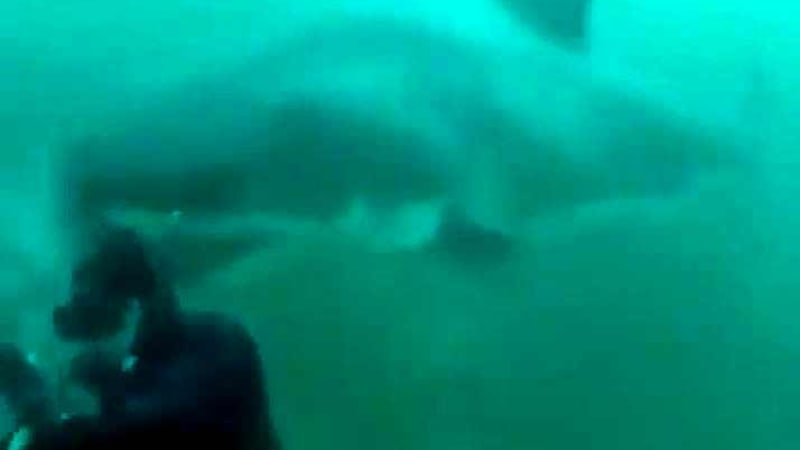 Video of great white shark encounter goes viral