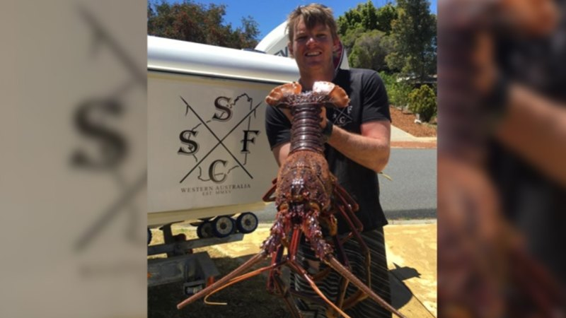Perth Diver Nabs A Stonka Crayfish As Super Moon Creates Ideal