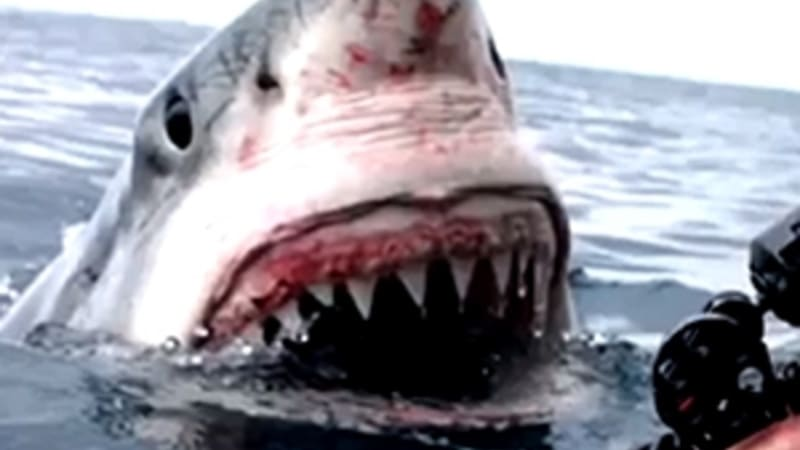 Filmmaker's close encounter with great white shark