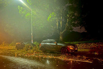 Trees were blown over outside Centennial Park on Oxford Street, Woollahra, after storms hit Sydney on Tuesday night.