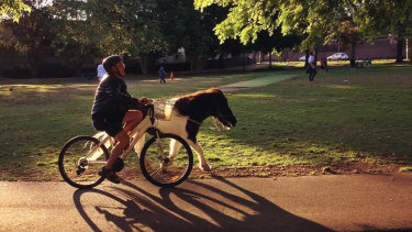 Summer Hill pony, Horse, will be allowed to continue living with owner Eric Findlay.