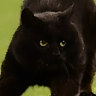 Black cat evades state troopers, steals the show, goes viral ...