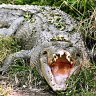 Crocodile euthanised after attack on Queensland ranger