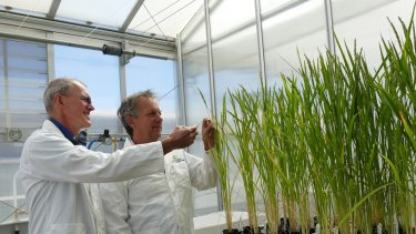 Professor John Evans (left) hopes a plant science conference in Brisbane will  encourage more to be done to secure grain yields.