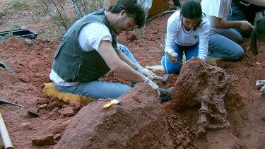 Study leader Juan Porfiri ,left, and students excavate vertebrae of the new predatory dinosaur Tratayenia rosalesi at the Tratayen site in Patagonia.
