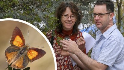 Butterfly flaps its wings in Montmorency – and upends $530m rail plan