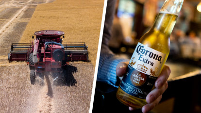 West Australian barley could be bound for bottles of Corona