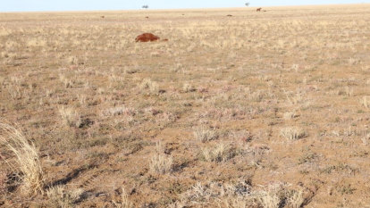 Community 'sickened and saddened' by horse massacre in outback Queensland