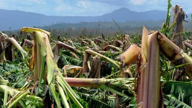 A north Queensland banana plantation devastated by 2011's Cyclone Yasi, just one of many natural disasters to befall our state in the past decade.