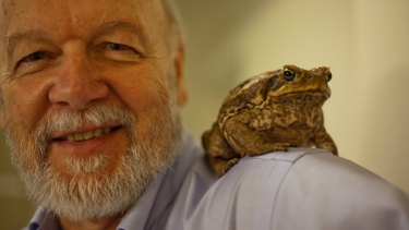 Emeritus professor Rick Shine, pictured, and his colleague Dr Chris Friesen have reported on the size of cane toad testes.