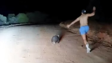 The video of the man stoning a wombat was posted to the Wombat Awareness Organisation's Facebook page.