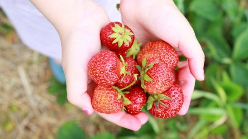 A Melbourne strawberry picker has tested positive for COVID-19 near Bundaberg in Queensland.