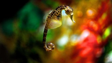 Male seahorses carry their offspring in a pouch.