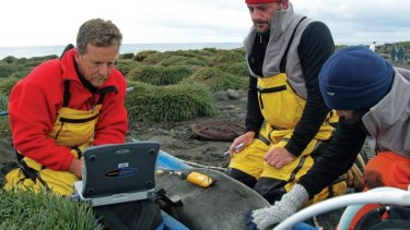Former Australian Antarctic Division director Nick Gales (left) with other scientists tagging a seal on Heard Island.