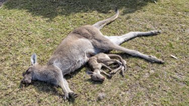 quality design 6af59 f7d3f Teenager charged with animal cruelty after allegedly mowing ...