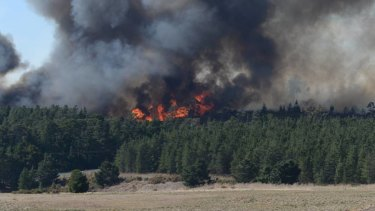 The blaze, which broke out near a pine plantation.