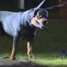 Sydney man charged after dog bites police officer on the face