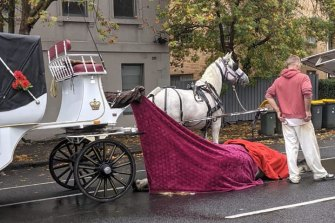 The campaign to remove horse-drawn carriages from the city was renewed after this horse dropped dead in North Melbourne last month.