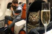 Aeroflot fat cat