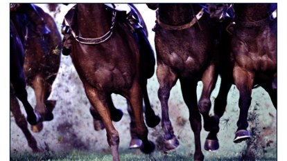 We care for our racehorses, but our industry must confront this mistreatment