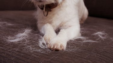 Managing the areas where your pet sheds fur can help allergy symptoms