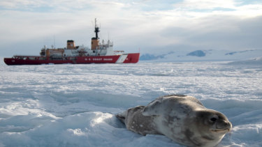 A seal lay on the ice in front of the Coast Guard Cutter Polar Star while the ship is hove-to in the Ross Sea near Antarctica.