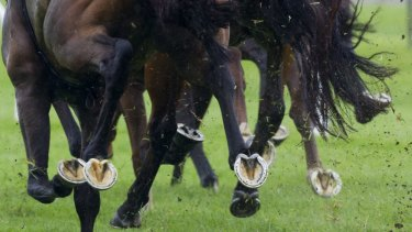 Racing returns to Scone with seven races on Monday.