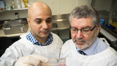 Professor Nigel McMillan (right) and Dr Luqman Jubair have been developing a way to edit the genes of cervical cancer cells to eradicate them.