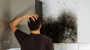 Mould is just one of the common pollutants in the home.