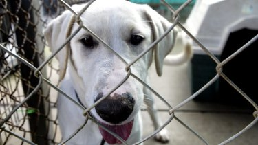 A rise in violence against dogs and puppies has prompted concern from RSPCA WA.