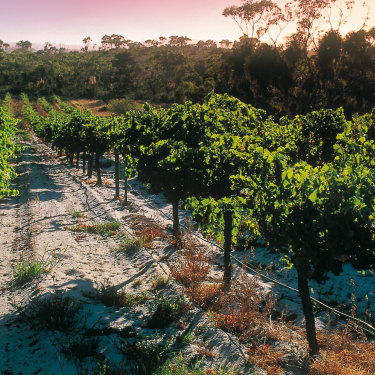Hardys in McLaren Vale, long loved for its built-to-last reds.
