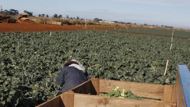 Migrant workers in Australia can be vulnerable for a range of reasons.