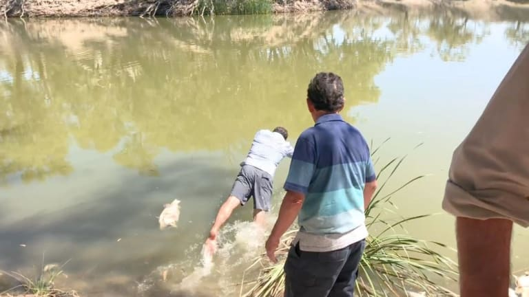 Independent MP Jeremy Buckingham jumps into the Darling River after vomiting off-camera.