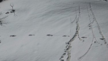 An image posted by the Indian Army purporting to show footprints from a Yeti.