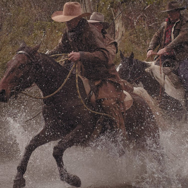In search of brumbies: a survey estimates the Victorian and NSW wild horse population to be more than 25,000.