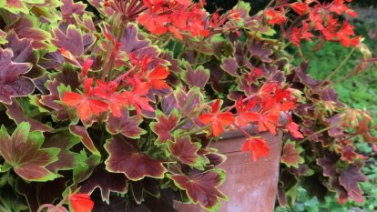 Which plant pots are right for your garden?