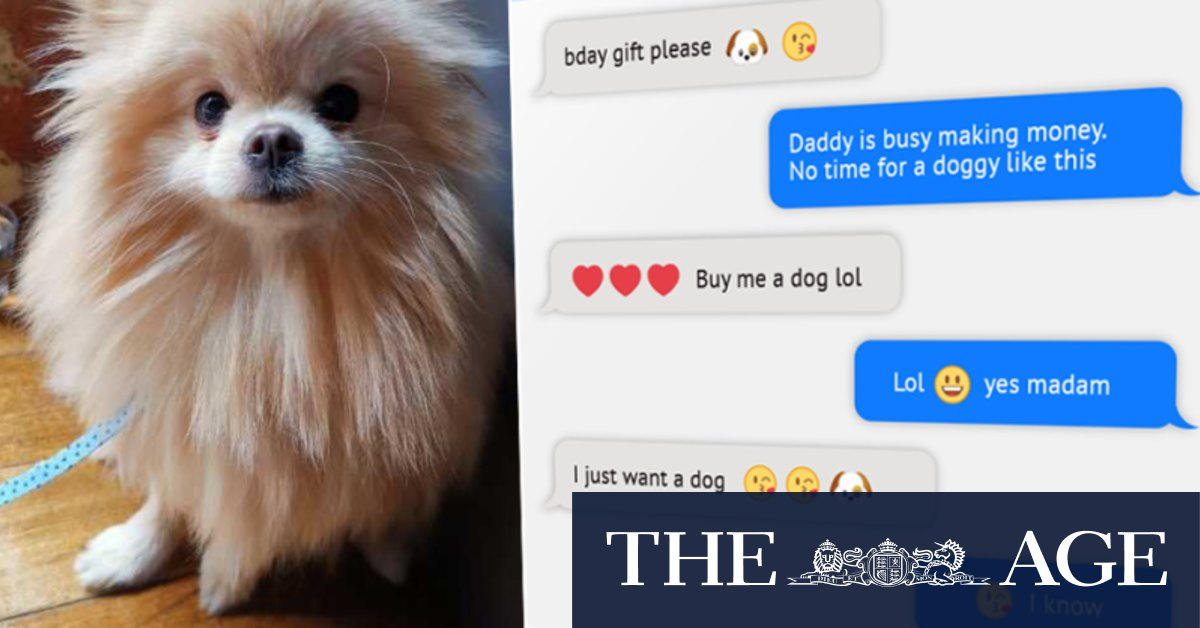 'He's my baby': Former couple take dispute over $4000 dog to court – The Age
