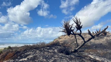The Fraser Island fire scorched hectares of vegetation.