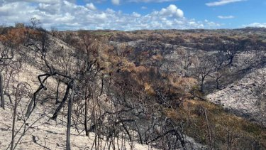 The fire on Fraser Island, which has been burning for six weeks, has ravaged half of the island.