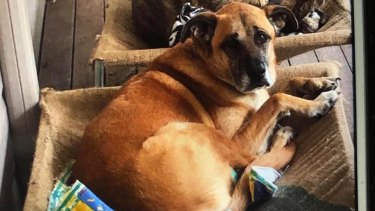 The Redlands community is searching for a dog that went missing after its owners were killed.