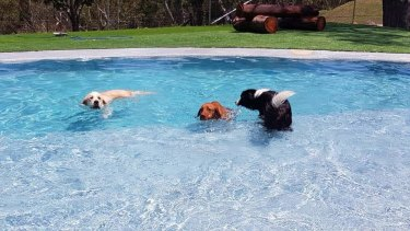 """Owner of Calabash Kennels and Cattery Linda Meumann has upgraded her kennels on a continual basis to create a """"five-star facility"""" featuring a grand pool and sensory garden."""