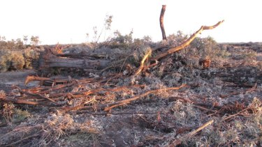 Land clearing near Croppa Creek in northern NSW.