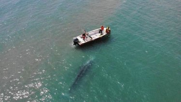 The grey whale off the coast of France this week.